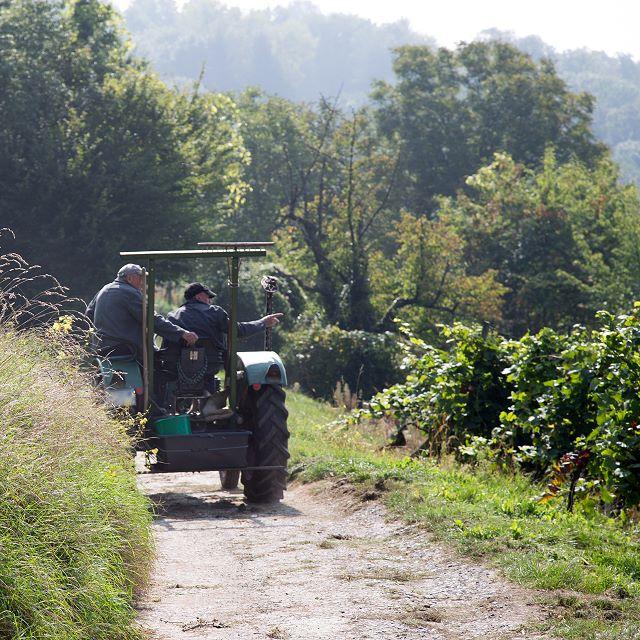 Blütenweg Traktor