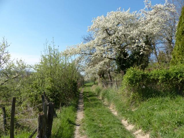 Der Blütenweg bei Sulzbach