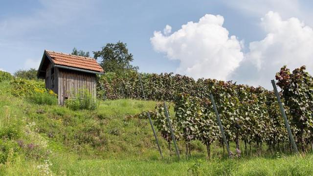 Weinberg-Hütte