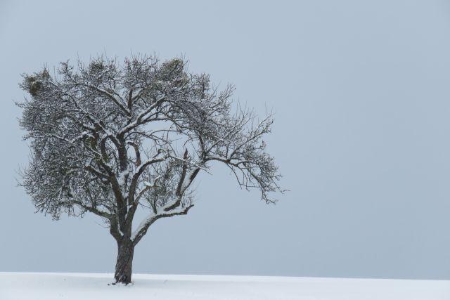 Winter-Birne