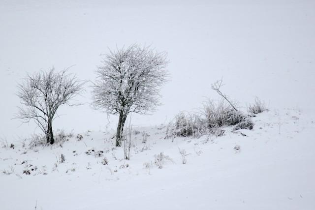 Schnee Strauch
